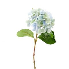 Hortensie Anni, hellblau, 60 cm
