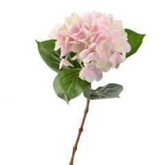 Hortensie Anni, rosa, 60 cm