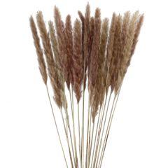 Pampasgras, braun, 78 cm